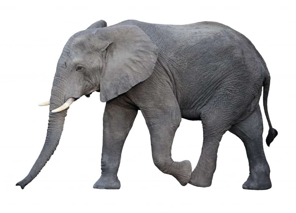 The Elephant in Nutrition
