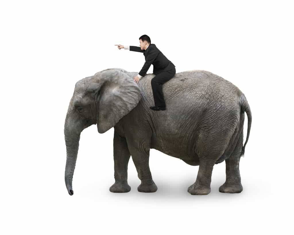 The Rider On The Elephant